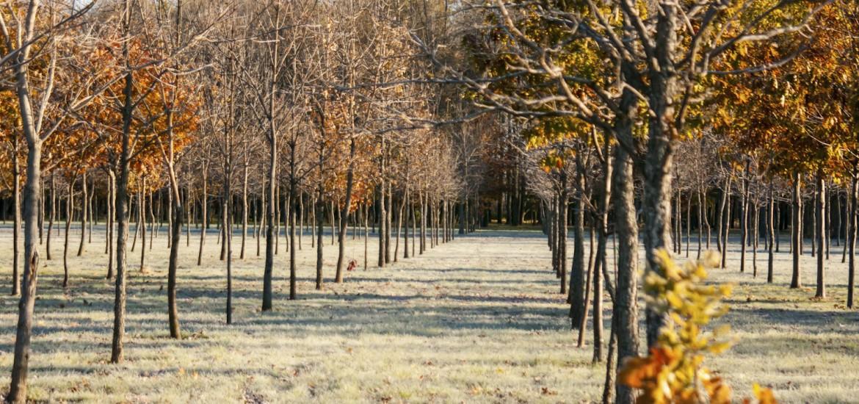 Plantation d'arbres – Enfouibec